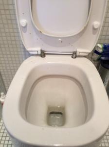 """So sah die Toilette aus, als wir nach (!) der """"hygienischen und fachgerechten Schimmelsanierung"""" nach Hause kamen. Uns wurde von Marion Lülfing dann ein neues WC versprochen, das natürlich auch nie kam."""